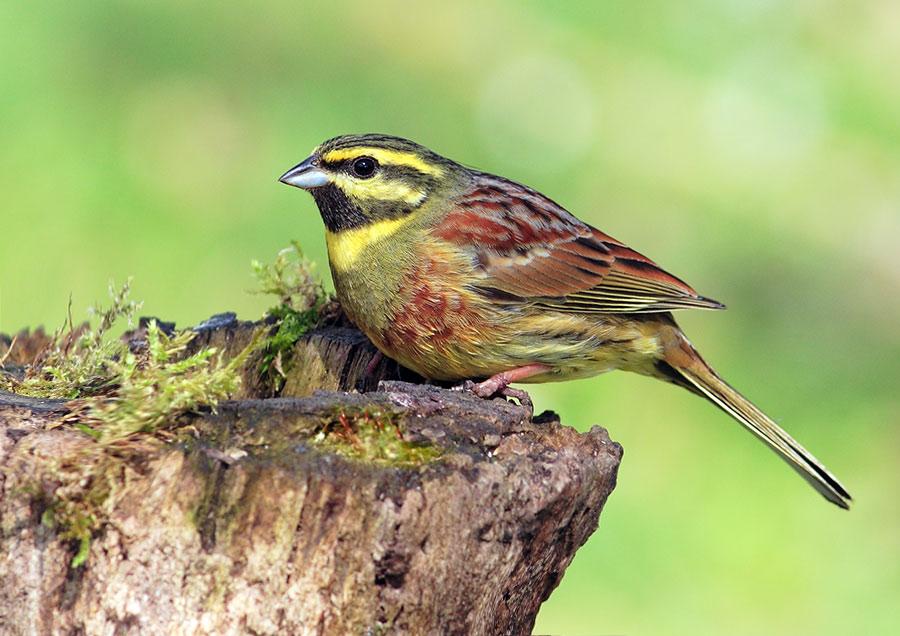Les oiseaux du jardin fran ois ribeaudeau chasse photo for Les oiseaux du jardin